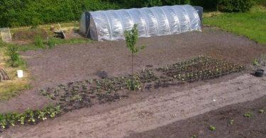 Bild Gärtnerhof Wanderup Solidarische Landwirtschaft
